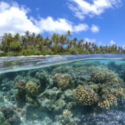 agua acuario marino
