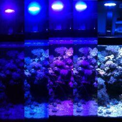 iluminacion acuario marino